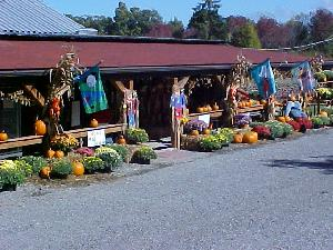 were not just for christmas anymore help us celebrate our 34th annual fall festival at hozak farmsstarting sept 29th and every saturday and sunday in - Clinton Pa Christmas Lights